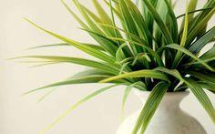 Petites mouches dans les plantes, voici 10 trucs et remèdes pour en finir avec les mouchettes dans vos plantes vertes!