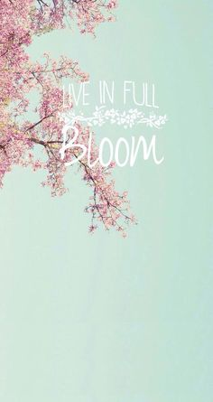 Live in full bloom ★ quotes spring wallpaper, iphone wallpap Iphone Spring Wallpaper, Cute Wallpaper For Phone, Tumblr Wallpaper, Disney Wallpaper, Flower Wallpaper, Wallpaper S, Wallpaper Quotes, Cherry Blossom Wallpaper Iphone, Backgrounds Free