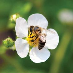 Neonicotinoid Insecticides: Are Your Nursery Plants Being Treated With Bee-Killing Chemicals?