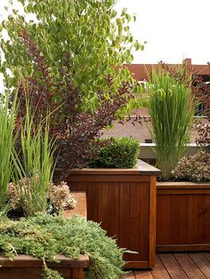 These big wood box planters would be great for planting fruit trees near the house.