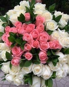 Красивые Розы, Желтые Розы, Голубые Розы, Красивые Цветы, Розовые Цветы, Забавные Фото Со Дня Рождения, Розовые Розы