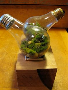 Light bulb terrarium with moss...a fun light bulb project! You can also try making your own light bulb moss terrarium, but your best bet is to use an air plant (epiphyte) in there...they handle enclosed environments much better!