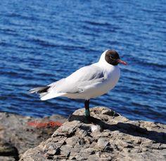 Fugler Birds, Photography, Animals, Fotografie, Animales, Animaux, Photography Business, Photo Shoot, Fotografia