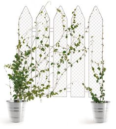 Small privacy wall idea using climbing vines or ivy and u can even skip the buckets and plant fence directly into ground planter.