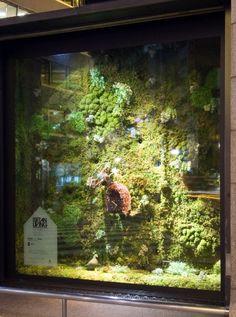鳩時計コレクション Artificial Green Wall, Window Display Design, Wall Ideas, Hermes, Sculptures, Windows, Boutique, Space, Decoration