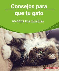 Consejos para que tu gato no dañe tus muebles Los gatos son un amor, pero suelen desarrollar actitudes que pueden llegar a enloquecernos. Te damos algunos consejos que tu gato no dañe tus muebles. #daños #adiestramiento #consejos #gatos