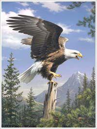 Bucilla ® Counted Cross Stitch - Picture Kits - Screaming Eagle | Plaid Enterprises