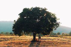 Tree / photo by SixtysixVisual