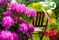 #Rhododendron. Sie gehören definitiv zu den wichtigsten #Blütensträucher.   Sie sind #prachtvoll und #pflegeleicht.   Hier finden Sie #Tipps für den richtigen Platz.   Außerdem gehen wir in diesem Beitrag auf die #Pflege von #Rhododendren ein und wie Sie ihn am Besten schneiden. Tricks, Plants, Pictures, Nursing Care