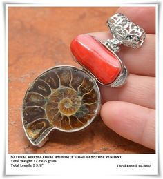 Red Coral - Ammonite Fossil
