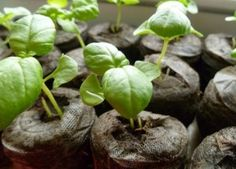 7 Reasons Why Seeds Fail to Grow - Good Advice for the Budding Gardeners Among Us. :)