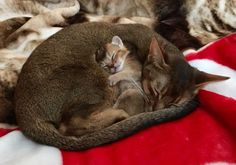 mother and child naptime