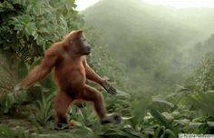 Get ready to laugh! This hilarious orangutan knows how to 'move it, move it' and the funny ad will make you smile. Weekender, Funny Cute, Hilarious, Funny Gifs, Funny Videos, Friday Dance, Friday News, Funny Animals, Cute Animals
