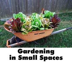 Skip Ruchter, Harris County CEA - Horticulture shares practical ways to produce your own food in small spaces.