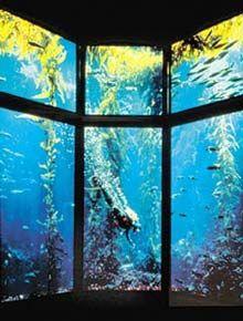 Monterey Bay Aquarium.   CANNOT WAIT!
