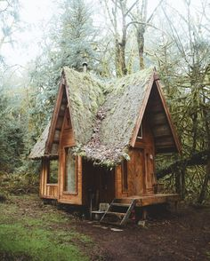 SOG Adventurer and quaint forest cabins. House among the trees. Live among the Trees. Cabin in the Forest.