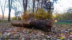 autumn days 13 Autumn In My Heart, Autumn Day, Seasons, Plants, Seasons Of The Year, Flora, Plant, Planting