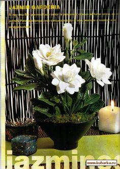 Die 256 besten Bilder von Gardenia Jasmin Tuberose ...