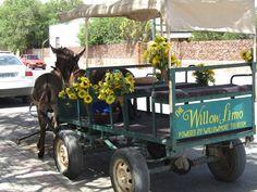 Sightseeing donkeycart Limo, Donkey, South Africa, Tourism, Monster Trucks, Rainbow, Ears, Turismo, Rain Bow