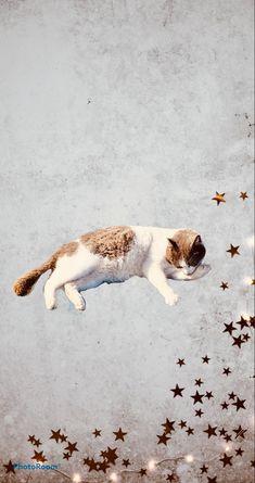 #cats Cat Phone Wallpaper, Phone Lock, Corgi, Kitty, Cats, Animals, Little Kitty, Corgis, Gatos