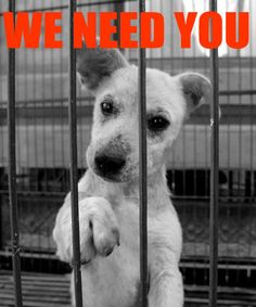 adopt from a shelter not a puppy mill I Love Dogs, Puppy Love, Animal Rescue Quotes, Animal Graphic, Love Your Pet, Puppy Mills, Beautiful Dogs, Dog Pictures, Animal Kingdom