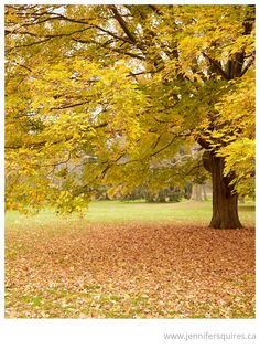 Nature Photography – The Smell of Fall