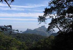 Floresta da Tijuca - Rio de Janeiro.