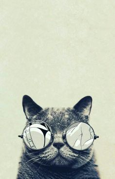 Sis didn't realise what the cat in her wallpaper was looking at Wallpaper Gatos, Htc Wallpaper, Hipster Wallpaper, Wallpapers En Hd, Stunning Wallpapers, Gatos Cool, Hipster Background, Cat Art Print, Kawaii