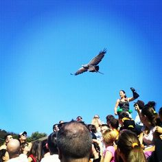 #Eagle in #Cabarceno #Cantabria