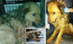 Starving dogs in Romanian shelter forced to EAT each other