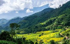 Download wallpapers Hoang Su Phi, mountains, rice fields, plantations, Vietnam, rainforest, highlands