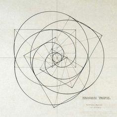 iosonorockmaballoiltango: Spirale di Fibonacci