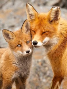 I love you my BABY-FOX!!!