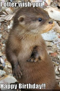 I otter wish you  Happy Birthday!!