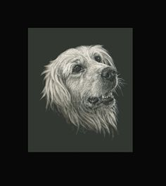 Golden Retriever -  This is the actual size of the scratch art. This size is intended as example of a memorial for an urn. Smaller work, like this, can easily be done for a pendant or jewellery. I can work from a photo. A web site dedicated to this is planned. In the mean time I can be contacted at sue@suewalters.com #goldenretreiver