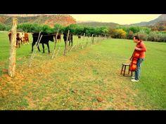 Cello Cow Call - ThePianoGuys
