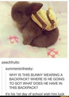 Cute Animal Memes, Animal Jokes, Cute Funny Animals, Funny Animal Pictures, Funny Cute, Cute Dogs, Cute Pictures, Cute Babies, Awesome Dogs