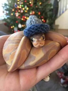 25 Cute Snakes with Hats 14 Baby Animals Super Cute, Cute Little Animals, Cute Funny Animals, Baby Animals Pictures, Cute Animal Pictures, Animals And Pets, Cute Pics, Wild Animals, Baby Farm Animals
