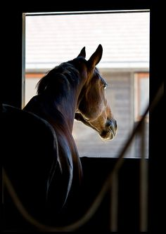 this looks peaceful to me.I love the quiet of a stable and I love the smell of a horse.