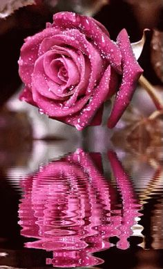 Rose Live Wallpaper is Animated live wallpaper. Beautiful Flowers Wallpapers, Beautiful Rose Flowers, Beautiful Gif, Pretty Flowers, Pink Flowers, Simply Beautiful, Beautiful Pictures, Roses Gif, Flowers Gif