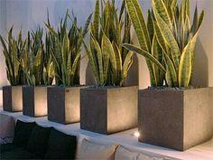 Ideas Stone Patio Garden Potted Plants For 2019 Backyard Design, Potted Plants, Front Yard, Plant Decor, Modern Garden, Landscape Lighting, Indoor Plants, Patio Interior