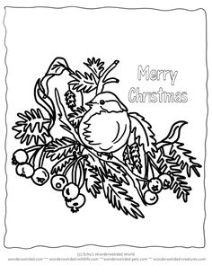 printable christmas coloring pages birds for Wonderweirded-Wildlife.com, Winter Birds to Color for Kids Christmas Activities , NO $ , Free Parent and Teacher Resources