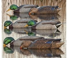 Avian X Back Water Mallards Duck Decoys