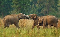Your Guide To Elephant Spotting Across India