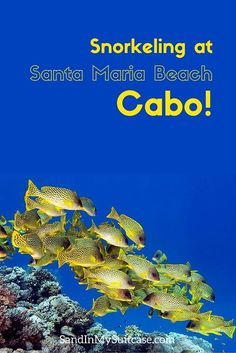 CABO SAN LUCAS | Great snorkeling in Cabo, Mexico? Santa Maria Beach is one of the 3 best places to snorkel in Cabo San Lucas. No need to take a tour -- go on your own for the best snorkeling. Here's how...
