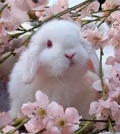 Bunny & Blossoms Pictures, Photos, and Images for Facebook, Tumblr ...