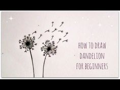 how to draw dandelion - easy version for beginners