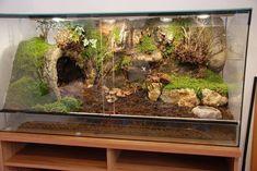 Haustiere Gecko home reptiles Gecko Haustiere home reptile terrarium Tarantula Habitat, Reptile Habitat, Reptile Room, Reptile Cage, Pet Tarantula, Lizard Habitat, Terrariums Gecko, Leopard Gecko Terrarium, Lizard Terrarium