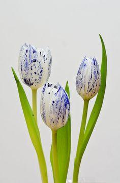 Tulips in Ink by Sebastiaan van Venetiën on 500px