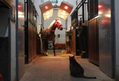 """A cat looks at Lipizzaner horse """"Alea"""" as it stands under a solarium at the stables of the Spanish Riding School in Vienna, April 18, 2012.   REUTERS/Lisi Niesner"""